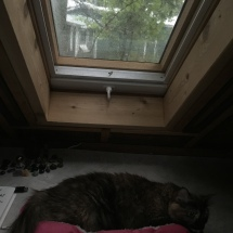 Olive loves her kitty bed under the skylight -- perfect for bug and bird watching!